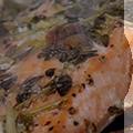 pescados icono